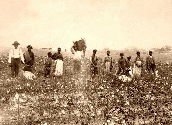 pamuk toplayan köleler güney Carolina
